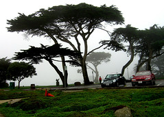 Lover's Point in Pacific Grove (brady frequent traveler and eater) Tags: ocean california trees monterey carmel minicooper pacificgrove loverspoint
