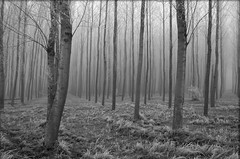 Fear (MariaJC) Tags: trees winter espaa cold fog lafotodelasemana landscapes blackwhite still spain topv333 bravo quiet silent emotions navarra 1in10f500v interestingness35 i500 exc3 exc4 exc5 exc2 exc1 analiza4044 masinteresante analiza9 50club 50clubxcalidad lfsarboles 1on1objectsphotooftheday abigfave aplusphoto goodmorningiloveyou