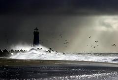 wild world (astrocruzan) Tags: ocean california winter cloud santacruz lighthouse bird wow bravo wave topf200 harbormouth utatafeature utatabythesea