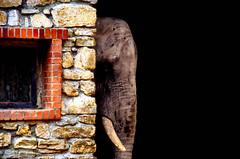 I'm so sad (A look through lens) Tags: elephant nature animals canon mammal zoo photoblog velvia photolog fujichrome canoneos onblack analogic naturesfinest artisticexpression superbmasterpiece