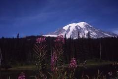 Mt. Rainier (artandscience) Tags: serenar 35mm