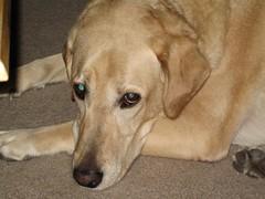 IMG_0009 (wra716) Tags: dog roark