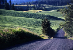 Road (bentilden) Tags: road usa green purple idaho palouse