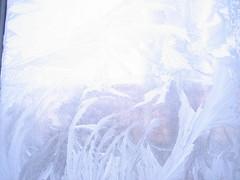 iceflowers (Sindre-Wimberger) Tags: winter fenster blumen eis eisblumen