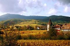 Alsace au naturel (without sunglasses) (Délirante bestiole [la poésie des goupils]) Tags: old france history 510fav landscape vineyard village wine albaluminis vine alsace histoire vin vigne histry mireasrealm