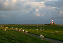 scattered sheep (ratsateit) Tags: top20nature