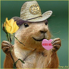 Kiss Me (Terry_Lea) Tags: squirrel squirrels photoshopfun tbas