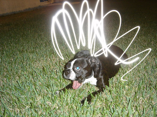 Help! My dog has Fleas.