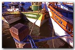 Amarrao das traineiras, Cabo Frio (Z Lobato) Tags: brasil riodejaneiro boat barco cabofrio zrobertolobato zlobato traineiras traditionalwoodenboats