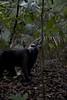 Apan i Bitung maj 2015 (j.annsofie) Tags: lea manado indonesien djungel segling segla bitung christiankasesalu projektjordenrunt wwwjessicasegerbergcom fotografjessicasegerberg henrikjšnsson jonathanwingœrd