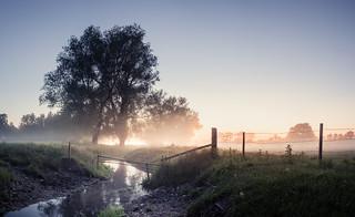 River Wensum 23/06/2015