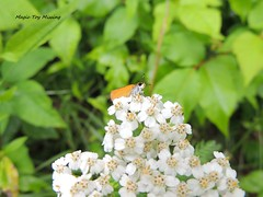 ~Life in General~ 15.06.18 (~Life in General~) Tags: flower field butterfly woods moth trails leafs stateland