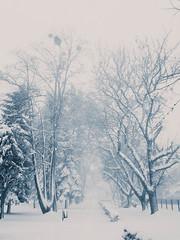 Gradski park Virovitica (antoniojurkin) Tags: winter croatia podravina hrvatska slavonija virovitica