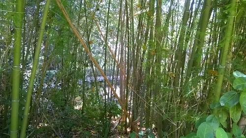 Bambù, Villa Malfitano Palermo