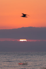 Amanecer en Mojacar #001 (Jose M. Peral) Tags: españa sol vertical contraluz mar andalucía rojo agua europa mediterraneo amanecer nubes verano silueta naranja gaviota almería paralelas mojacar volador albatro