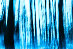 Winter Forest (Monika Ostermann) Tags: blue schnee winter snow lightpainting art forest deutschland spring cool europa seasons year pflanzen blau wald mrz januar frhling esch lightingeffects teutoburgerwald georgsmarienhtte niedersachsen temerature teuto 2013 osnabrckerland gmhtte klosteroesede