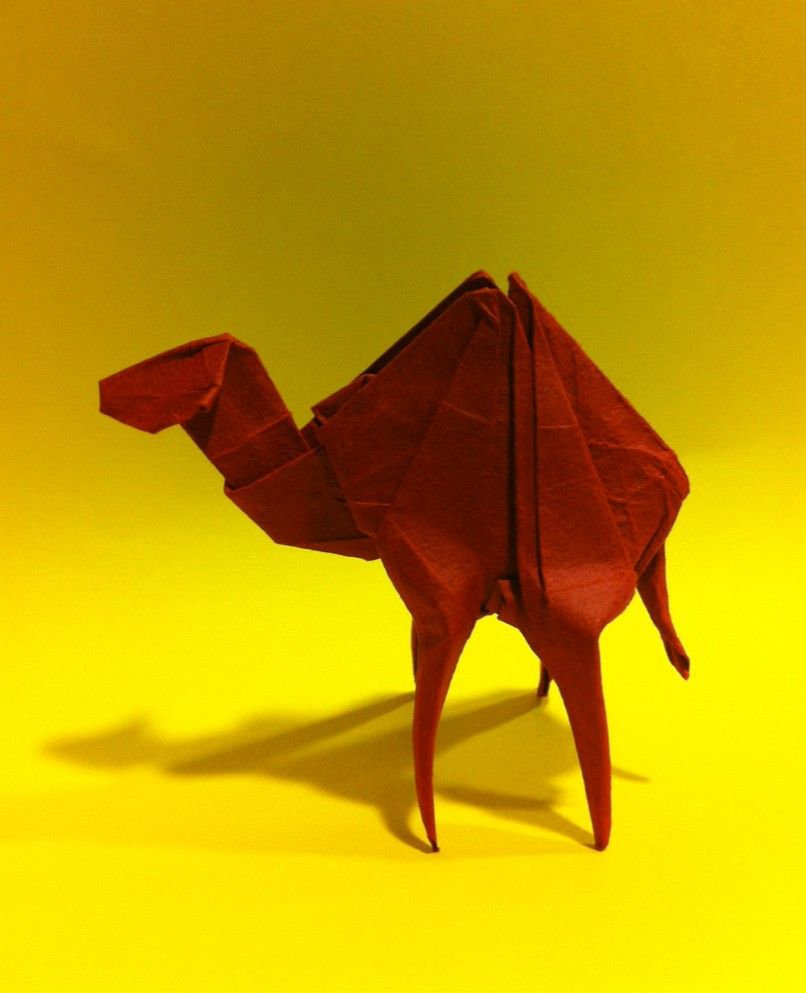 the worlds best photos of camel and origami flickr hive