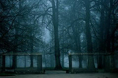 Open Gates To Heaven ( Thanks Dondu) (Marie.L.Manzor) Tags: forest trees mist fog mood landscape morning spooky misty atmosphere atmospheric nikon d610 marielmanzor light gothic wood mystery blue gate versailles 1000favs 1000favorites gettyimage brouillard brume backlight nature httpswwwinstagramcommarielmanzor httpswwwfacebookcommarielmanzor
