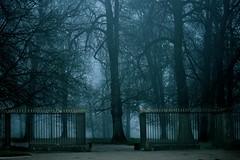 Open Gates To Heaven ( Thanks Dondu) (Marie.L.Manzor) Tags: forest trees mist fog mood landscape morning spooky misty atmosphere atmospheric nikon d610 marielmanzor light
