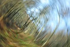 360°Rotation (friedrichfrank1966) Tags: rotation wlad drehung forest licht light nature natur heaven himmel