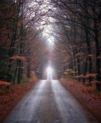 Forest road II, Lage Vuursche, the Netherlands