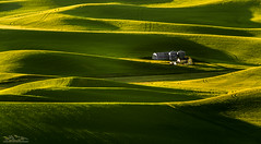 Great Curves (Jeff Stamer (Firefallphotography.com)) Tags: washingtonstate palouse curves wheat steptoebutte