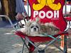 P1013466 (tatsuya.fukata) Tags: thailand chonburi pattaya happynewyear happynewyear2017 dog animal