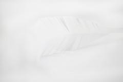 Paper Feather (Serena178) Tags: macro macromonday feathers white whiteonwhitepaper whitepaper paper soft canon explore photography photograph