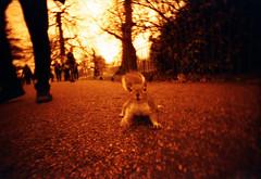 London (somekeepsakes) Tags: 2013 lcwide lomographyredscalexr london analog analogue eichhörnchen england europa europe film lomo red redscale rot squirrel uk