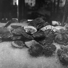 shellfish, octopus, shaved ice, Rialto Fish Market, Venice, Venetto, Italy, Rolleicord, Fomapan 200, Moersch Eco Film Developer, November 2016 (steve aimone) Tags: shellfish octopus shavedice ice rialto rialtofishmarket venice venezia venetto italy rolleicord fomapan200 moerschecofilmdeveloper mediumformat monochrome monochromatic blackandwhite 6x6