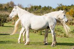 Miroir de Camargue (geolis06) Tags: geolis06 europe europa france camargue nikon nikond7200 sigma sigma150600mmf563dgoshsmcontemporary lapalissade cheval horse