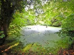 Stillwater (Big Star ✩) Tags: alwalton peterborough eastanglia england uk cambs water swamp green slime moss trees stillwater