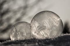 frozen bubble (Bánhidai Bea) Tags: frost frozen bokeh beyondbokeh bubble winter canon1100d