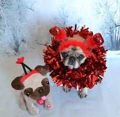12 Years Old And She Still Makes The Cutest Valentine! (DaPuglet) Tags: pug pugs dog dogs animal animals pet pets valentine heart costume cute february valentinesday greeting card puppy senior love littledoglaughedstories