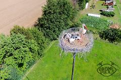 Le cicogne DronePills