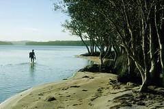 Wading along the Shores of The Broadwater, Myall Lakes National Park NSW, 19th September, 1971. (garratt3) Tags: aus film myalllakesnationalpark northcoast pentax rural takumar lake bushwalking wilderness australia kodachrome nsw newsouthwales paddymade