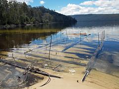 Lake St Clair wreck 3 (PhillMono) Tags: mountain lake reflection saint australia olympus shipwreck tasmania dslr clair barge e30 cradle