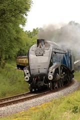Sir Nigel gresley rounding the curve near fen bog . (springers1) Tags: heritage diesel railway loco steam a4 bog fen nigel pickering nymr 6007 gresley