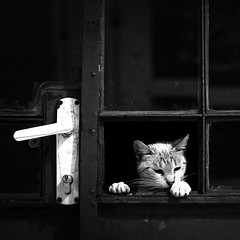 Anybody home? (Cristian Ştefănescu) Tags: pet animal animals cat square kitten fenster squareformat stray katze curious viewfrommywindow flickrfriday instagramapp flfrok