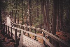 Crawford Lake 2 (Sarah A Janes) Tags: crawfordlake conservation hiking outdoors photography nature getoutside halton fall autumn canon 5dii