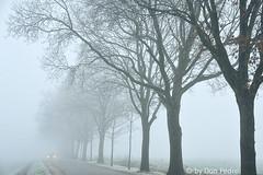 mist (Don Pedro de Carrion de los Condes !) Tags: donpedro d700 fx bomen weg landschap nijkerk mist kou koude vorst beulenkamp auto headlights