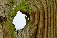 Knothole (Maggggie - Ask about Take Aim Group) Tags: takeaim fence knothole shape ghost imagination figure
