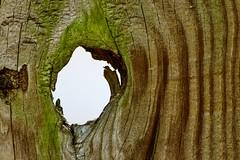 Knothole (Maggggie) Tags: takeaim fence knothole shape ghost imagination figure