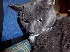 1360-18L (Lozarithm) Tags: smokey cats pets lumnix tz60 macro