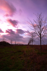 Purple Haze (Andrew.King) Tags: countryside pitsford northampton brixworth trees pattern grass wind clouds sky sunset purple haze blur long exposure nikon d7100 portrait composition tripod cokin nd filters field
