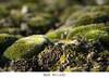 #237 (Les photographies de Marina) Tags: nature hauteloire hautallier myhauteloire myauvergne macrophotographie
