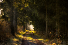 Les Grandes Marches (Stefan (ON/OFF)) Tags: forest forestscape path pathway walk march hike trees tree raysoflight sunlight pointofview viewpoint bayern bavaria germany deutschland sonya7 sonya7m2 sonyalpha7 sonya7ii sonya7markii canonef7020028lisiiusm