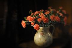 Coral Carnations (jm atkinson) Tags: bokeh wednesdays hbw carnations coral pottery dark light still