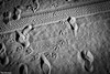Who Goes There? (Thad Zajdowicz) Tags: blackandwhite sand beach footprints birdtracks tiretracks pattern texture outdoor outside zajdowicz venicebeach losangeles california canon eos 5d3 5dmarkiii dslr digital availablelight lightroom monochrome black white bw animal surreal light shadow