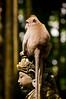 monkey on a statue (Sam Scholes) Tags: sangehmonkeyforest badungregency purabukitsari hinduism hindu travel bukitsaritemple bali palaforest sangeh holymonkeyforest vacation indonesia denpasar moneyforest abiansemal id